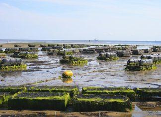 Ξεκινάει η αξιολόγηση των αιτήσεων χρηματοδότησης στις Υδατοκαλλιέργειες