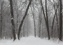 """Σφοδρή χιονόπτωση στην Πάρνηθα: Δείτε σε ποιες περιοχές το """"έστρωσε"""""""